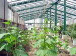 استقرار شرکت دانش بنیان رویان نهال و راه اندازی گلخانه صنعتی در دانشگاه پیام نور محلات